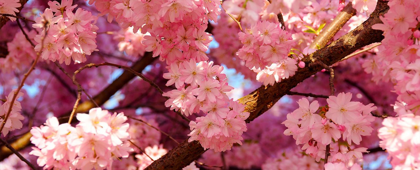 Japanski vrtovi, a usred Srbije