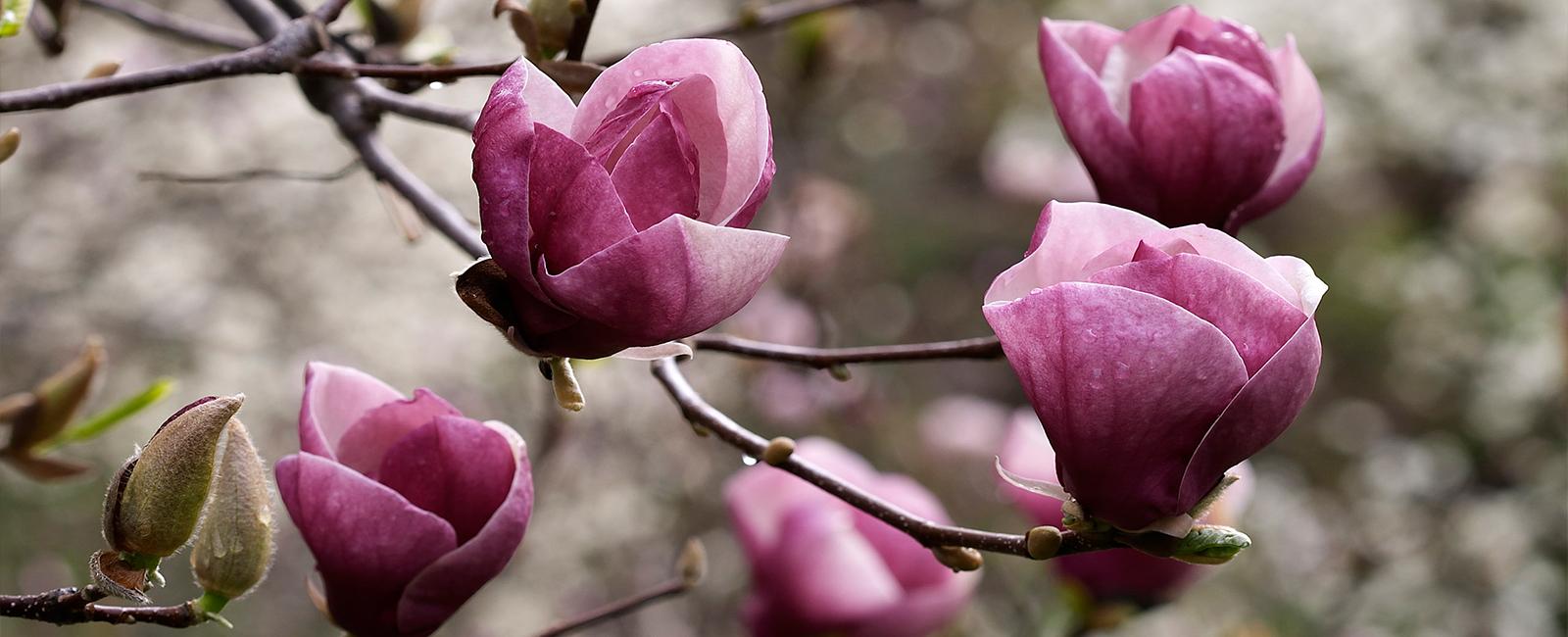 Hortikultura je vrtna umetnost