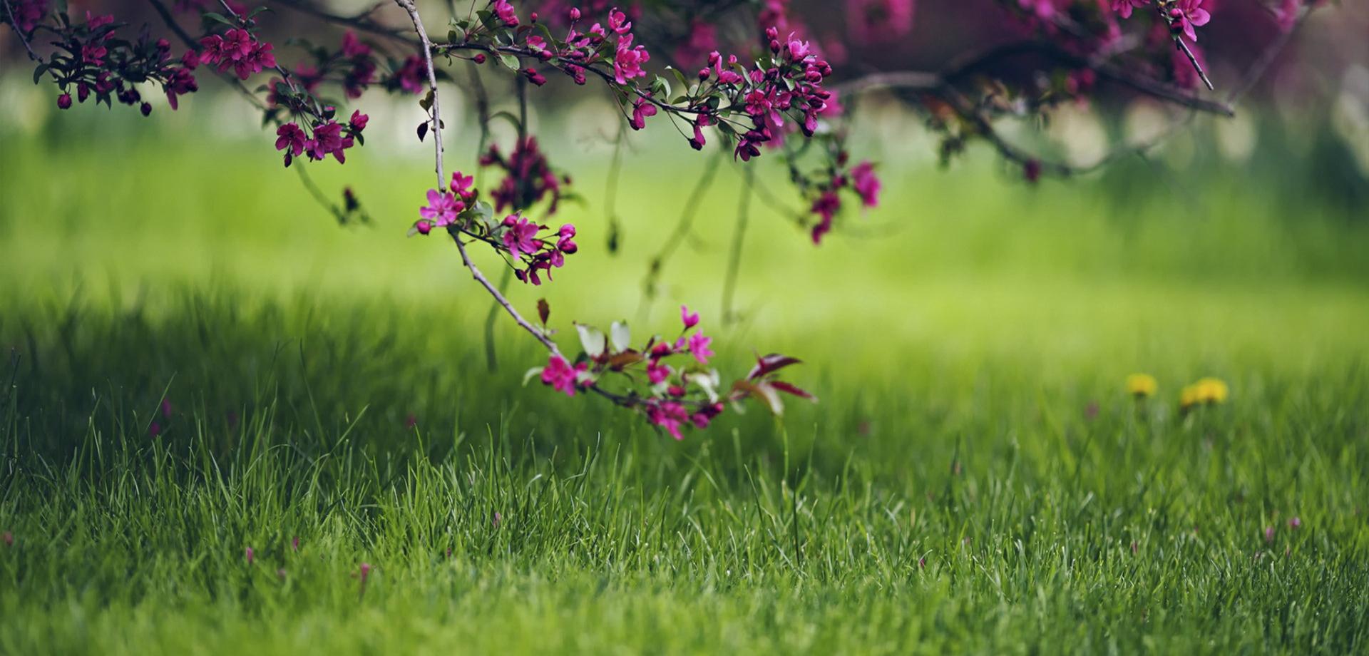 Planiranje travnjaka, izbor trave, priprema tla
